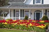 pic of front door  - The front of a house with large flower beds full of tulips - JPG