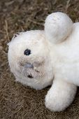 Old Cuddly Toy