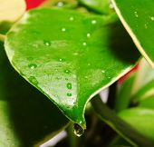 Rain Drop on Garden Plant