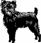 Affenpinscher black and white