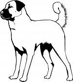 Anatolian Sheperd Dog Vector