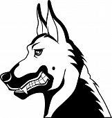 German Shepherd029 Bw