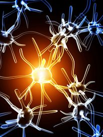 picture of neuron  - Impulses of neurons - JPG