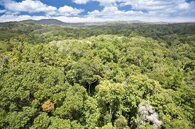 picture of canopy  - Canopy of Daintree Rainforest in Queensland - JPG