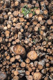picture of logging truck  - Pile of wood logs on truck for background - JPG