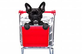 pic of bag-of-dog-food  - french bulldog dog inside a shopping cart trolley behind a blank empty banner or placard with a bone in mouth isolated on white background - JPG
