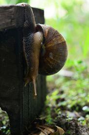 stock photo of garden snail  - snail walks on wooden plates in a garden - JPG