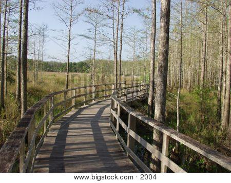 Florida Cypress Preserve 2325 poster