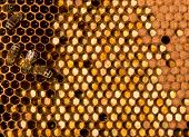stock photo of bee keeping  - In tsentalnyh cells are collected from the pollen of flowers - JPG