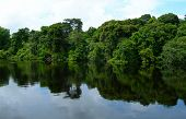 stock photo of negro  - Rain forest at water banks on Rio Negro in the Amazon River basin - JPG