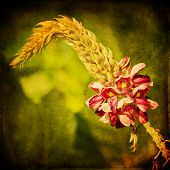 foto of kudzu  - Kudzu flower in late summer with textured background - JPG