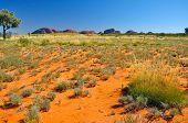 Kata Tjuta, NT Australia