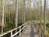Florida Cypress Preserve 2299