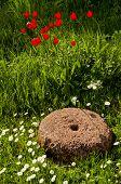 Old Millstone In The Garden