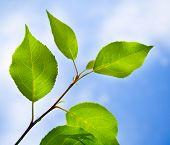 Groene bladeren lijst