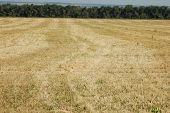 Just Field