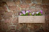 petunia flowers on a stone wall