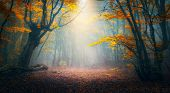 Enchanted Autumn Forest In Fog In The Morning. Old Tree poster