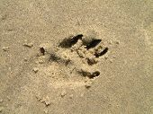 Pawprint In Sand