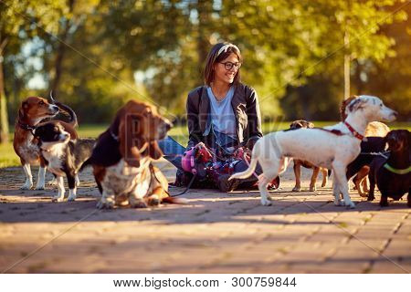 poster of Walking dogs - Happy woman dog walker enjoying with dogs