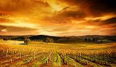 A stunning sunset over an autumn vineyard in South Australia