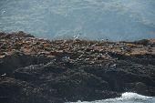 Matsu Chinese Crested Tern Mating Ground