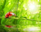 Little ladybug drinking fresh morning dew on a spring grass. Sunny day concept. Close up with shallo