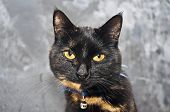 picture of molly  - This is a picture of my cat Molly - JPG