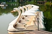 A group of ducks pleasureboat at Lumpini Bangkok Thailand