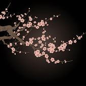 vector branch of cherry blossom over black