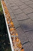 foto of gutter  - Home maintenance problem - JPG