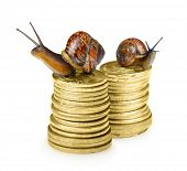 Snail on coins isolated on white
