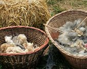 Baskets Of Wool