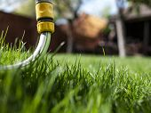 Green Grass And Watering Hose. A House And A Garden. Uncut Grass poster