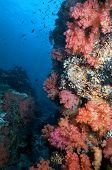 Fijian Soft Corals