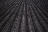 Plowed Black Soil