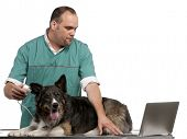 stock photo of otoscope  - Vet examining a Border Collie with a digital otoscope in front of white background - JPG