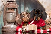 Puppy Christmas dog dachshund, New Years puppy poster