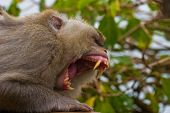 Monkey Attack