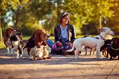 Walking dogs - Happy woman dog walker enjoying with dogs