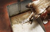 Cat And Mouse Dead.