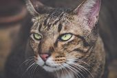 Annoyed Cat Angry Brown Tabby Cat Close Up Background poster
