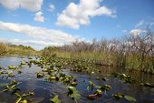 foto of airboat  - Ecosystem vegetation of the Everglades National Park - JPG