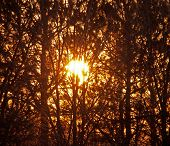 Glowing orange sun behind trees
