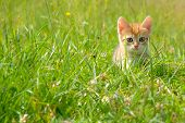 Kitten on a grass