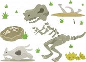 Illustration of Different Kinds of Dinosaur Bones with Grasses