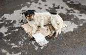 Stray Dog Resting On The Ground. Text In Russian: I Badly Want To Eat