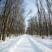 Estrada florestal de Inverno