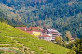 Houses In The Black Forest Mountains, Near A Vineyard. Germany - Baden-wurttemberg