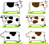 Cartoon Cows
